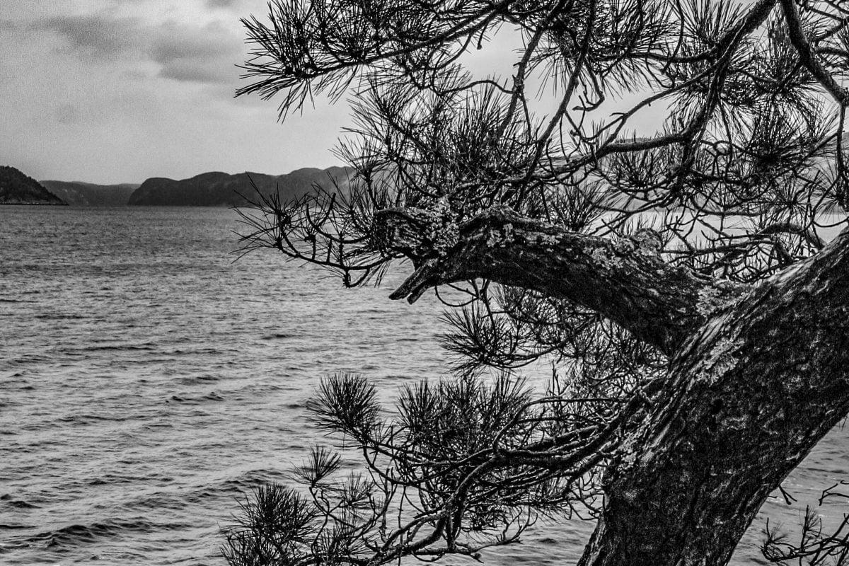 Quelque part le fjord